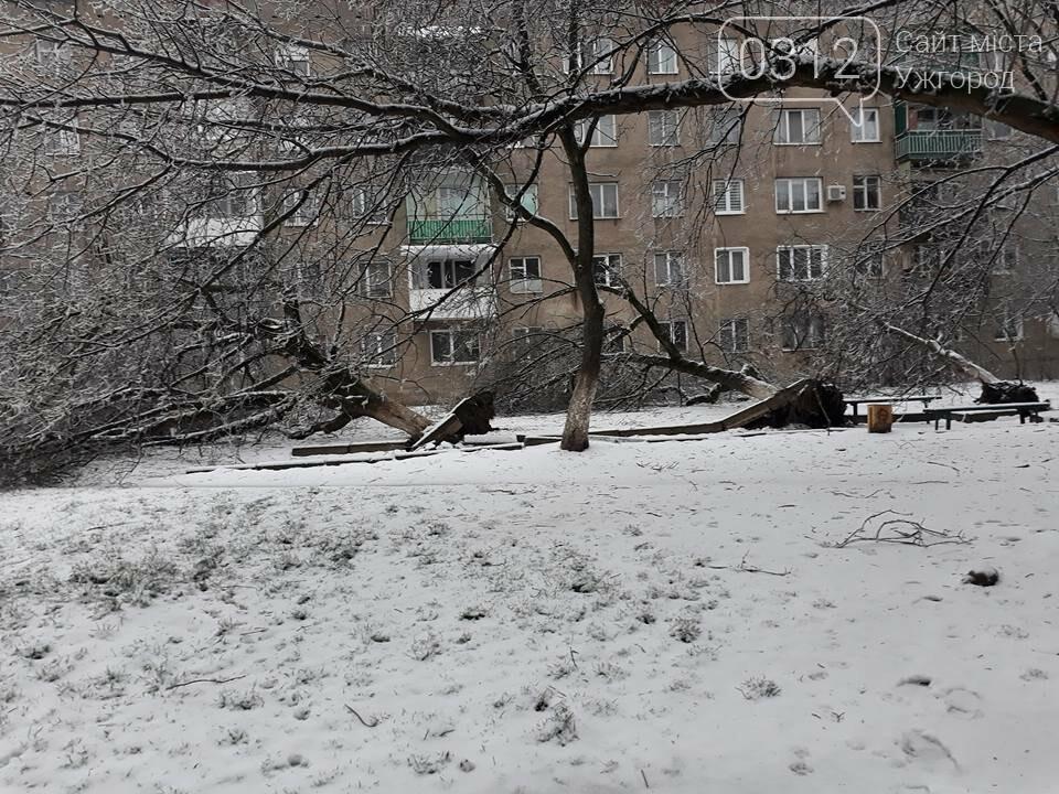 У Виноградові шквальний вітер повалив дерева (ФОТО), фото-9