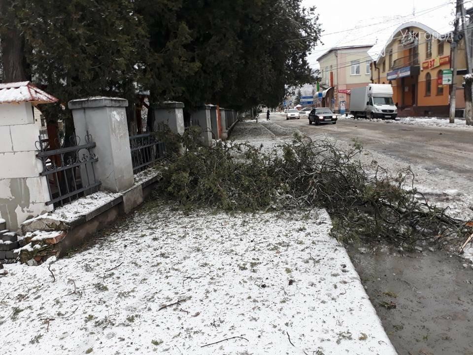 У Виноградові шквальний вітер повалив дерева (ФОТО), фото-10