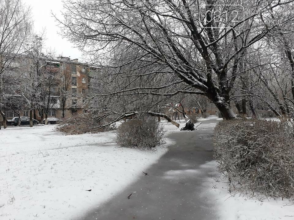 У Виноградові шквальний вітер повалив дерева (ФОТО), фото-11