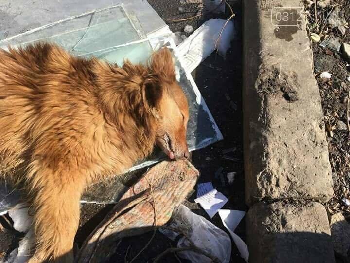 """""""ЇЇ звали Рижка"""": в Ужгороді знову труять собак (ФОТО 18+), фото-1"""