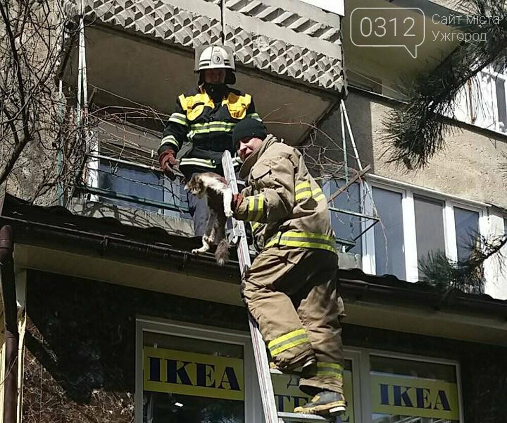 В Ужгороді рятувальники дістали з даху магазину 2-х котів, один з яких незрячий, що випали з третього поверху (ФОТО), фото-1