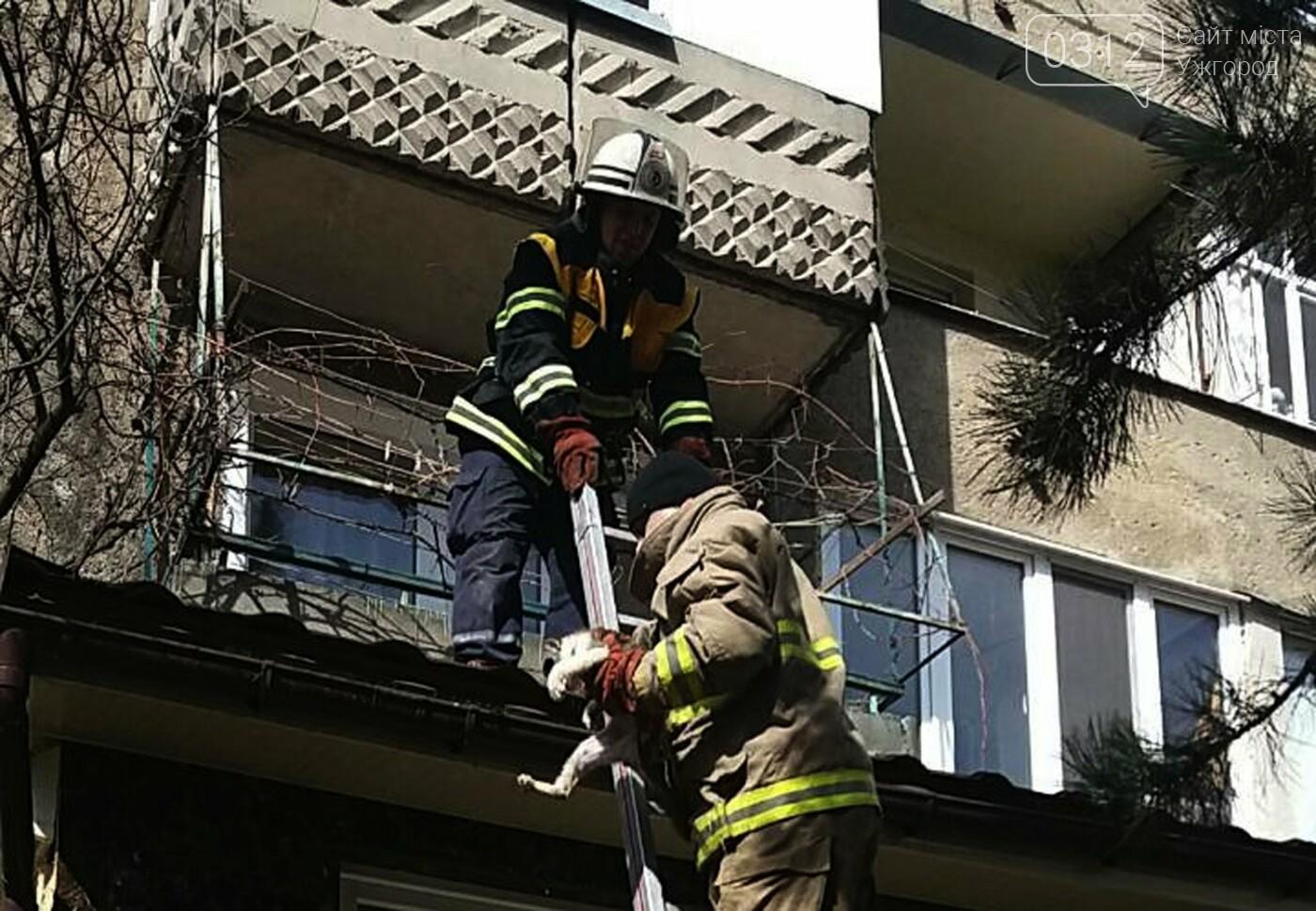 В Ужгороді рятувальники дістали з даху магазину 2-х котів, один з яких незрячий, що випали з третього поверху (ФОТО), фото-2