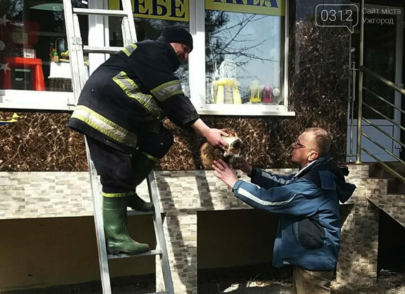 В Ужгороді рятувальники дістали з даху магазину 2-х котів, один з яких незрячий, що випали з третього поверху (ФОТО), фото-3