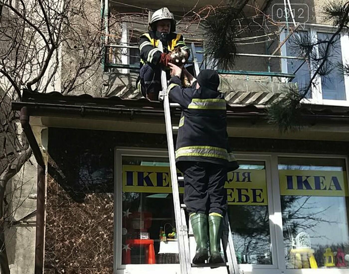 В Ужгороді рятувальники дістали з даху магазину 2-х котів, один з яких незрячий, що випали з третього поверху (ФОТО), фото-4