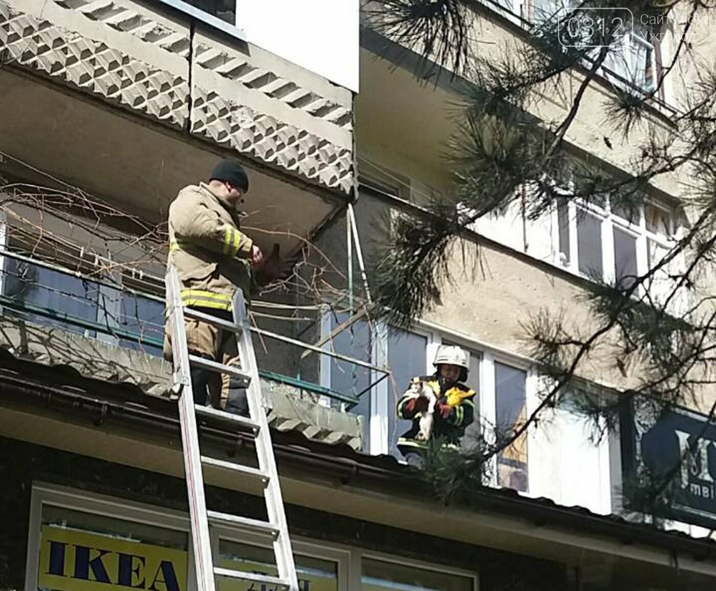 В Ужгороді рятувальники дістали з даху магазину 2-х котів, один з яких незрячий, що випали з третього поверху (ФОТО), фото-5