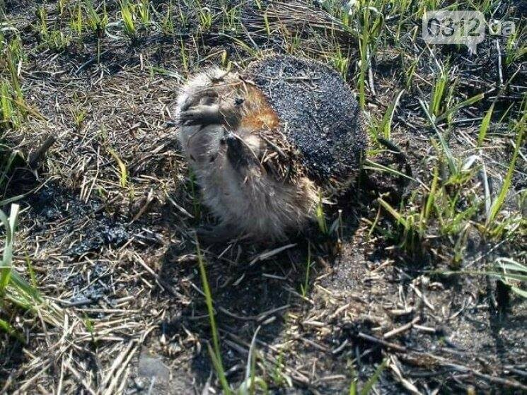 Закарпатці почали палити сухостій: від масштабних пожеж вимирає флора та гинуть тварини  (ФОТО, ВІДЕО), фото-5