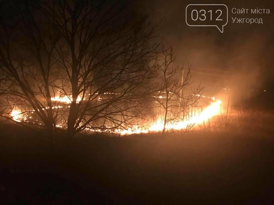 Закарпатці почали палити сухостій: від масштабних пожеж вимирає флора та гинуть тварини  (ФОТО, ВІДЕО), фото-2