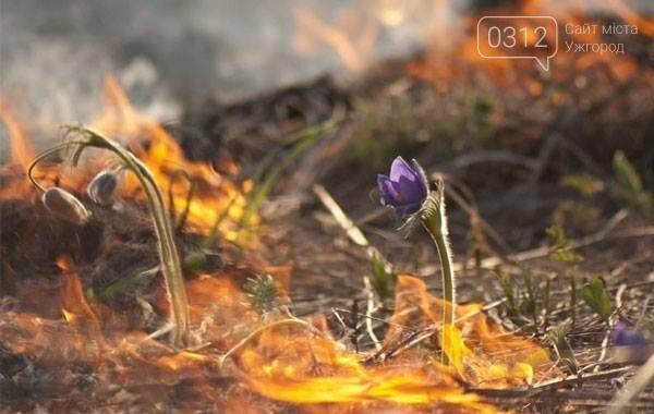 Закарпатці почали палити сухостій: від масштабних пожеж вимирає флора та гинуть тварини  (ФОТО, ВІДЕО), фото-4