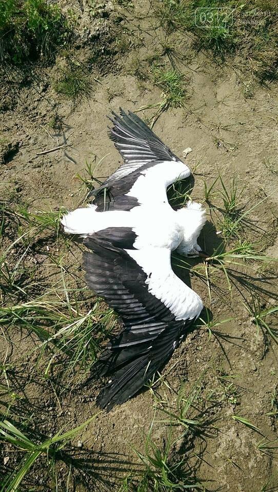 У селі під Ужгородом невідомі убили лелеку (ФОТО 18+), фото-1