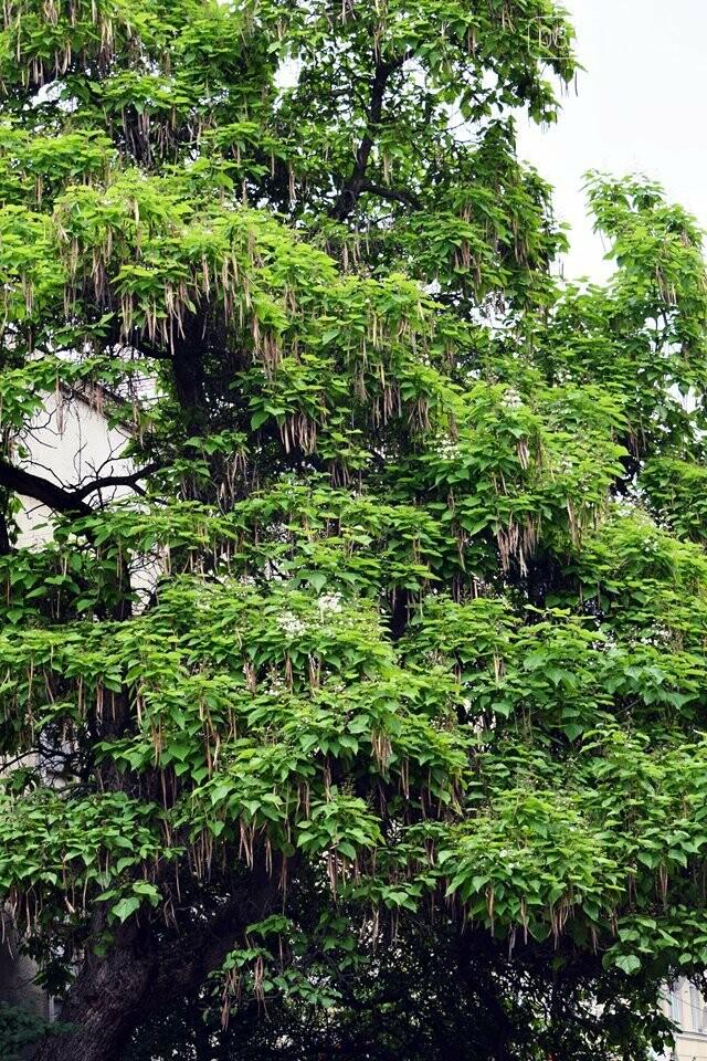 Де знайти в Ужгороді «макаронне дерево»? (ФОТО), фото-7