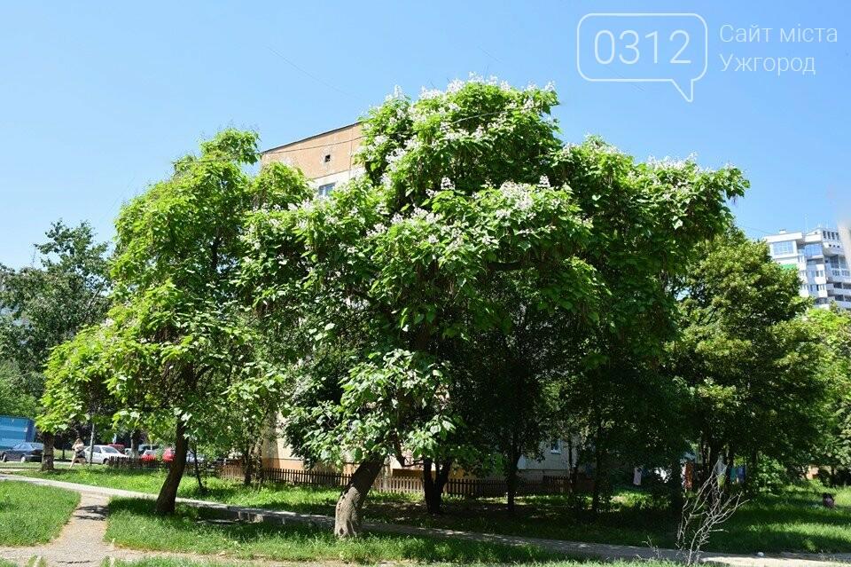 Де знайти в Ужгороді «макаронне дерево»? (ФОТО), фото-5