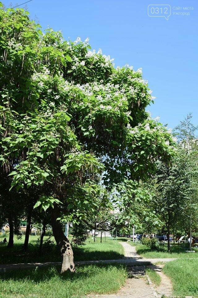 Де знайти в Ужгороді «макаронне дерево»? (ФОТО), фото-8