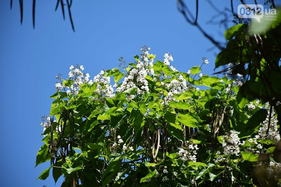 Де знайти в Ужгороді «макаронне дерево»? (ФОТО), фото-2