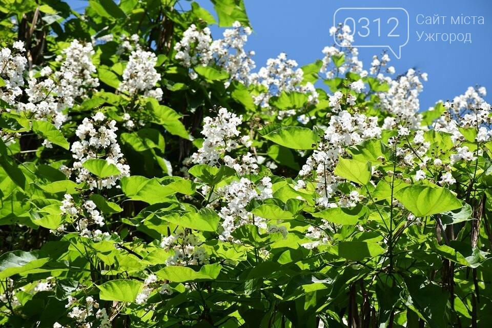 Де знайти в Ужгороді «макаронне дерево»? (ФОТО), фото-9