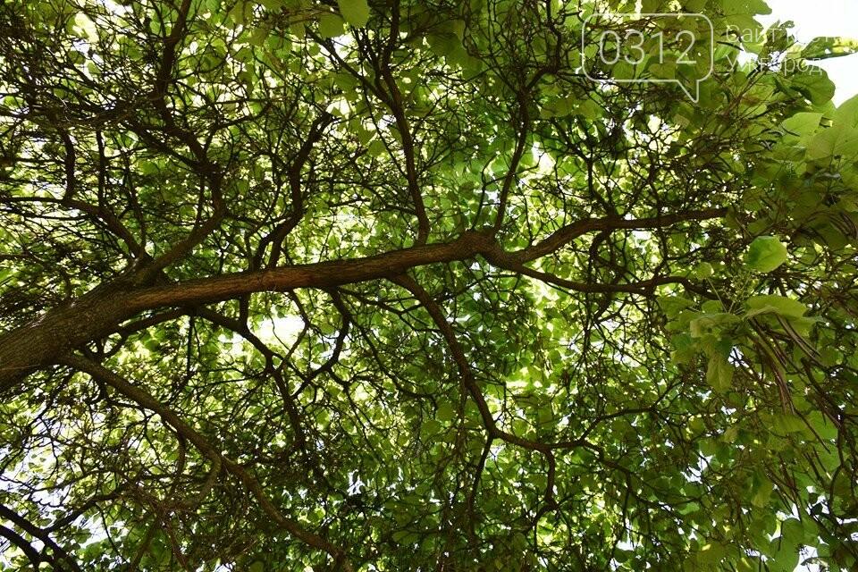 Де знайти в Ужгороді «макаронне дерево»? (ФОТО), фото-4