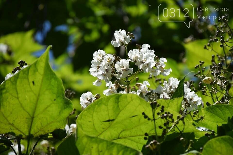 Де знайти в Ужгороді «макаронне дерево»? (ФОТО), фото-6