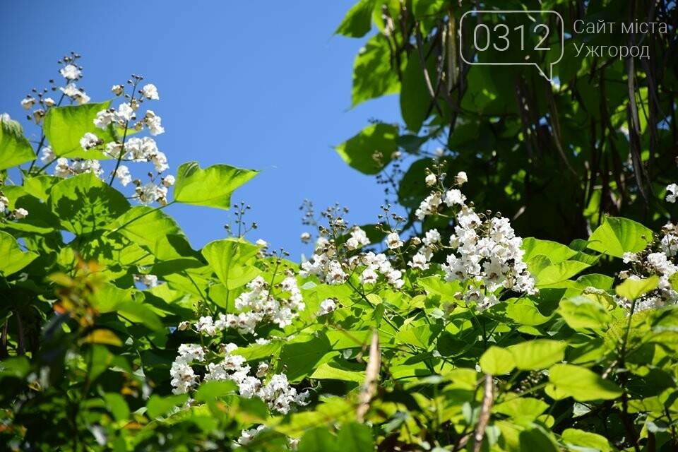 Де знайти в Ужгороді «макаронне дерево»? (ФОТО), фото-3