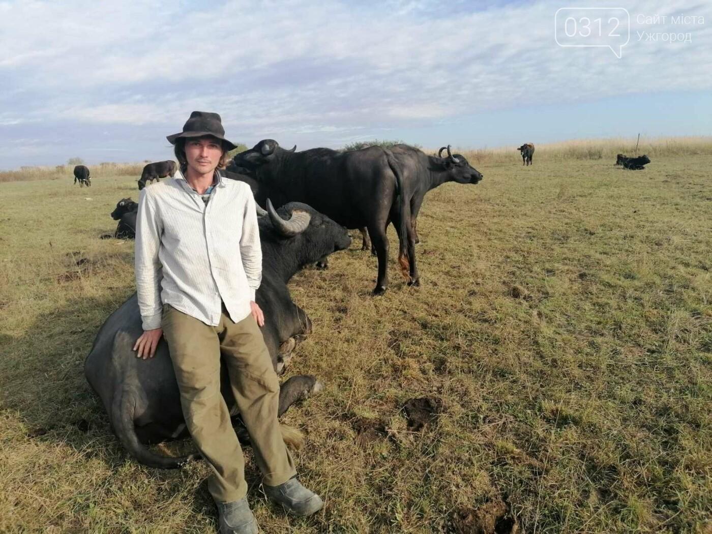 Еколог з Німеччини кинув усе та переїхав на Закарпаття розводити буйволів (ВІДЕО), фото-2