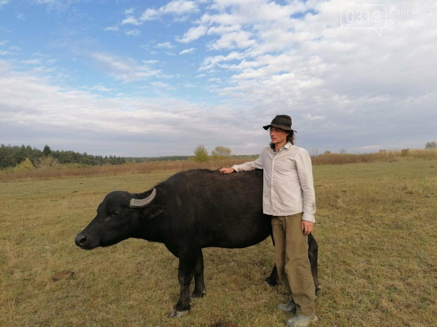 Еколог з Німеччини кинув усе та переїхав на Закарпаття розводити буйволів (ВІДЕО), фото-1