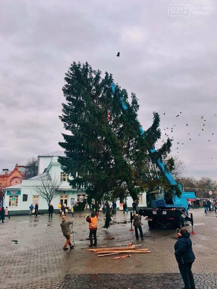 Свято наближається: В Ужгород прибула головна ялинка міста (ФОТО, ВІДЕО), фото-2