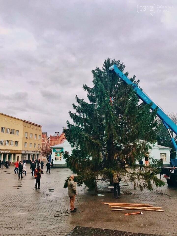 Свято наближається: В Ужгород прибула головна ялинка міста (ФОТО, ВІДЕО), фото-3