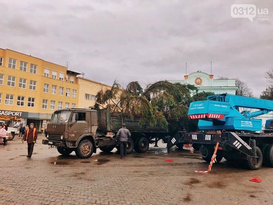 Свято наближається: В Ужгород прибула головна ялинка міста (ФОТО, ВІДЕО), фото-1