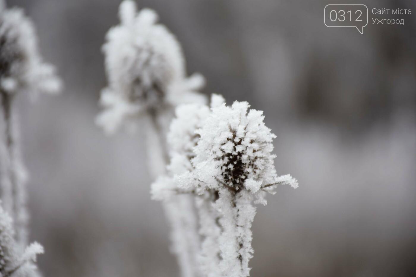 Ужгородський парк «Кірпічка»: засніжений і без снігу, фото-5