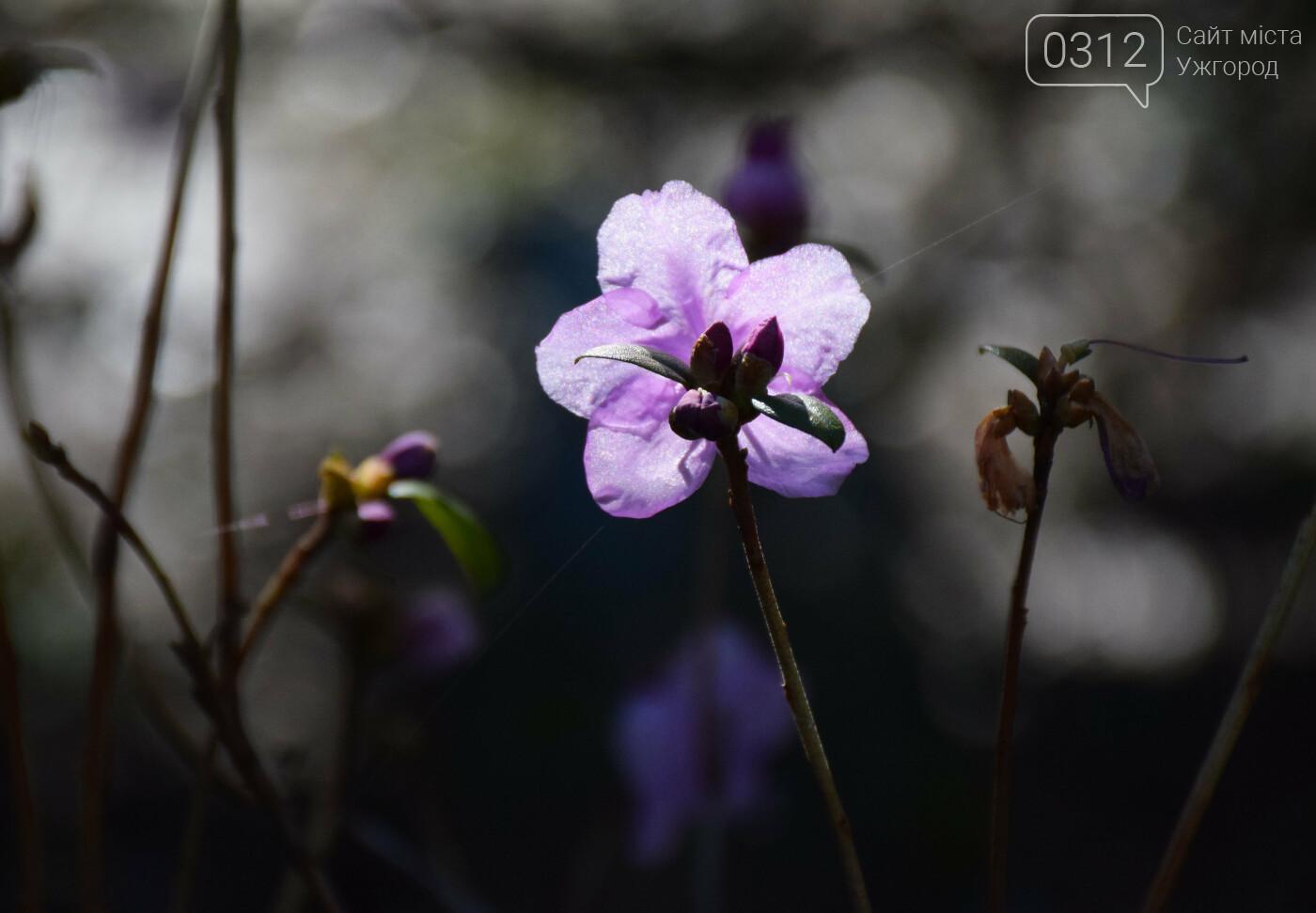 Ужгород квітне! Шукаємо весну й у собі (ФОТОРЕПОРТАЖ), фото-2