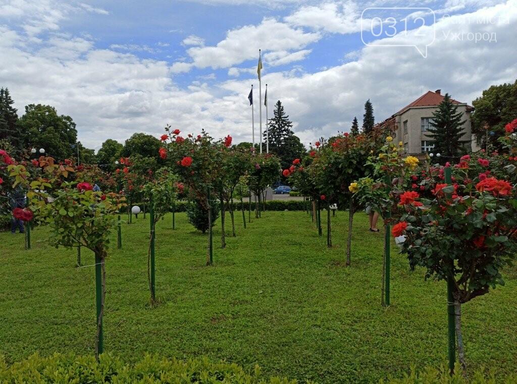 Ужгород – місто, де все квітне алеями. На черзі – жасмин! (ФОТО), фото-11