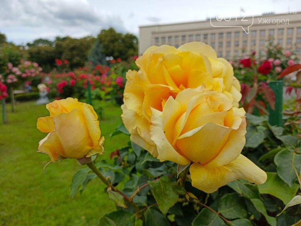 Ужгород – місто, де все квітне алеями. На черзі – жасмин! (ФОТО), фото-14
