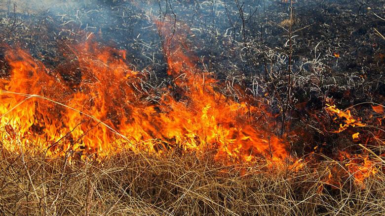 Через потепління на Закарпатті підвищився ризик виникнення  пожеж