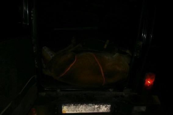 На Берегівщині затримали браконьєрів з тушею вбитого оленя: фото, фото-1
