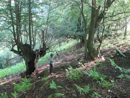 На Закарпатті у лісі браконьєр підстрелив 9-річного хлопчика: фото, фото-1