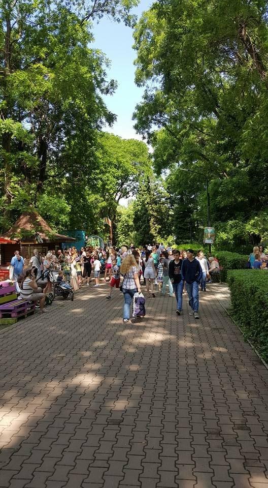 """Як ужгородська малеча на безкоштовних атракціонах у Боздоському парку """"каталася"""", фото-2"""