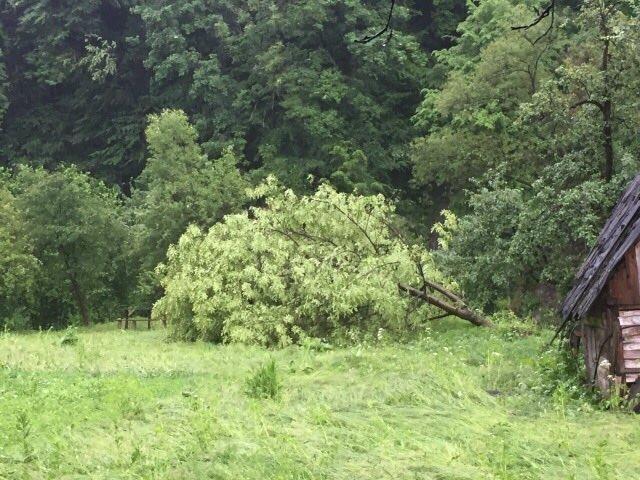 На Рахівщині буревій пошкодив дах школи, повалив десятки дерев і залишив півсотні будинків без світла: фото, фото-2