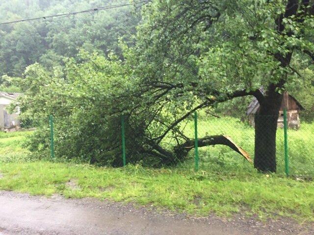 На Рахівщині буревій пошкодив дах школи, повалив десятки дерев і залишив півсотні будинків без світла: фото, фото-1
