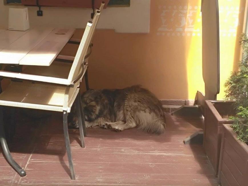 Ужгородський Хатіко після смерті своєї господарки щодня повертається на одне й те саме місце: фото, фото-2