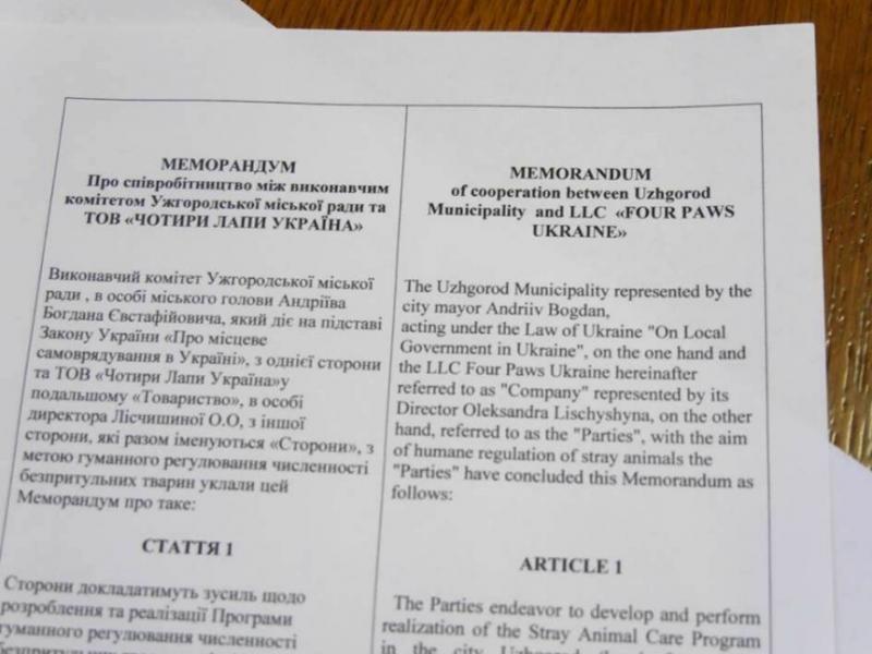 Волонтери розповіли меру Ужгорода, як потрібно відловлювати бродячих собак: фото, фото-1