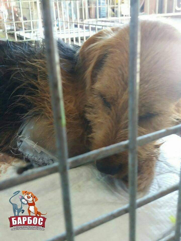 На Ужгородщині невідомі зі зброєю поранили собаку: Бобик залишився без лапи (ФОТО), фото-4
