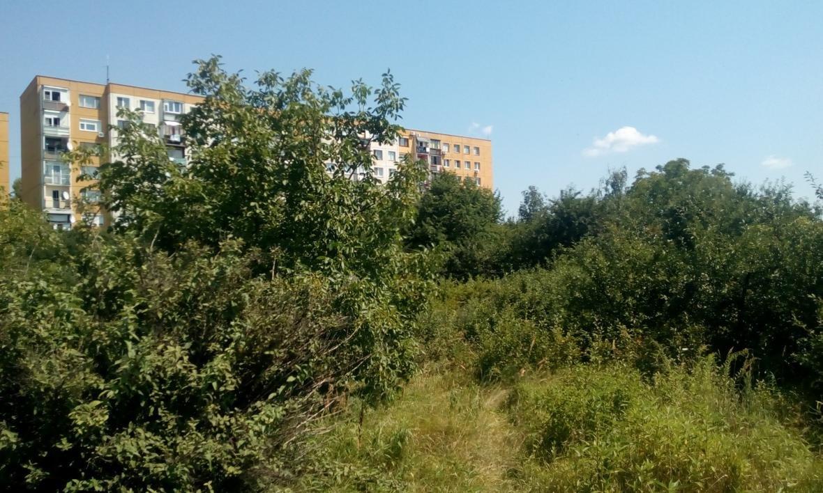 В Ужгороді на Можайського невідомі знищують зелену ділянку, обрубуючи дерева - правозахисник: фото, фото-2