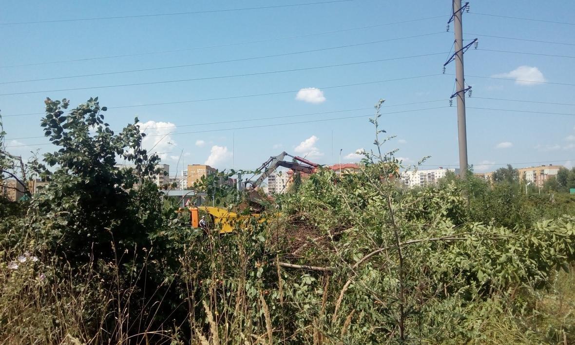 В Ужгороді на Можайського невідомі знищують зелену ділянку, обрубуючи дерева - правозахисник: фото, фото-1