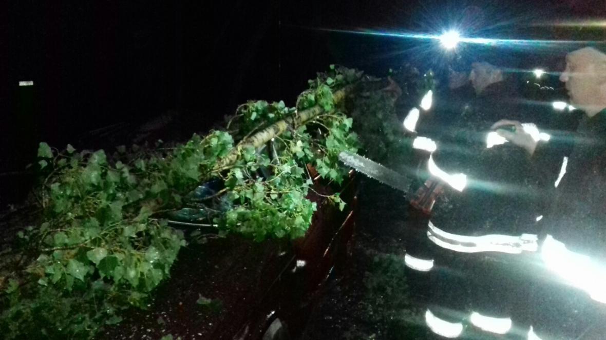 Нічна гроза: в Ужгороді дерева потрощили машини, частина Закарпаття - без світла (ФОТО), фото-1