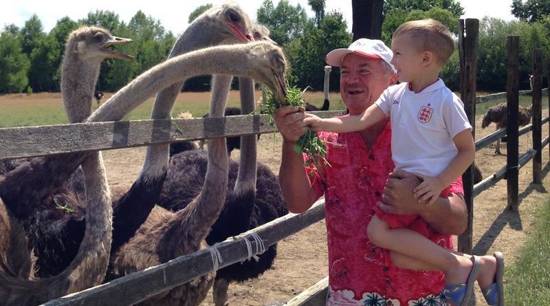 Як Василь із Хуста страусів на фермі вирощує: фото, фото-3