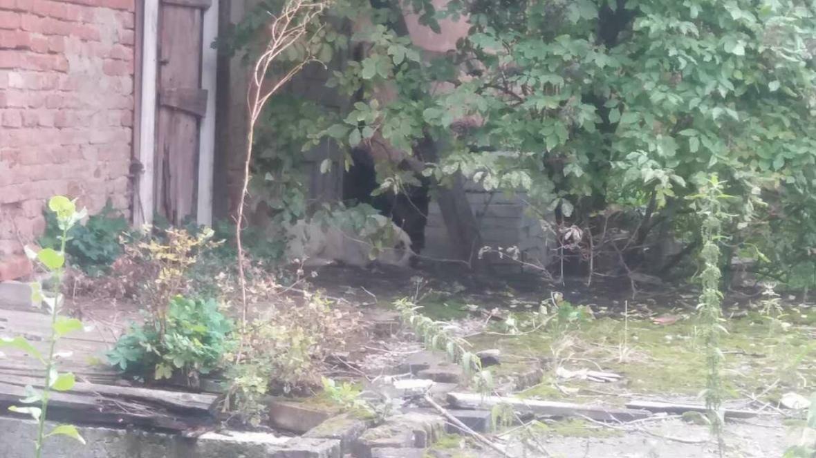 Люди перелякані: в Ужгороді шукають власників алабая, який заліз у чуже подвір'я на Дендеші (ФОТО), фото-1
