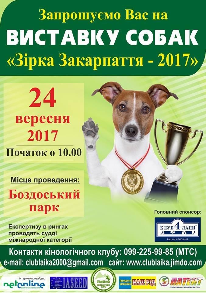 В Ужгороді до Дня міста пройде масштабна виставка собак, фото-1