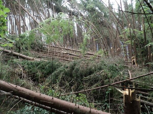Ураган на Закарпатті знищив понад 1000 гектарів лісів (ФОТО, ВІДЕО), фото-1