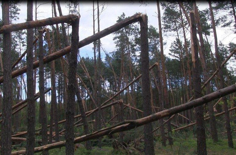 Ураган на Закарпатті знищив понад 1000 гектарів лісів (ФОТО, ВІДЕО), фото-2
