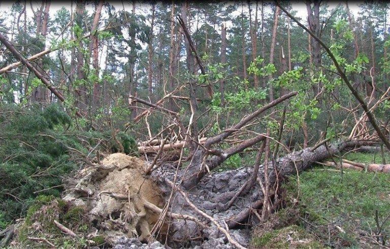 Ураган на Закарпатті знищив понад 1000 гектарів лісів (ФОТО, ВІДЕО), фото-3