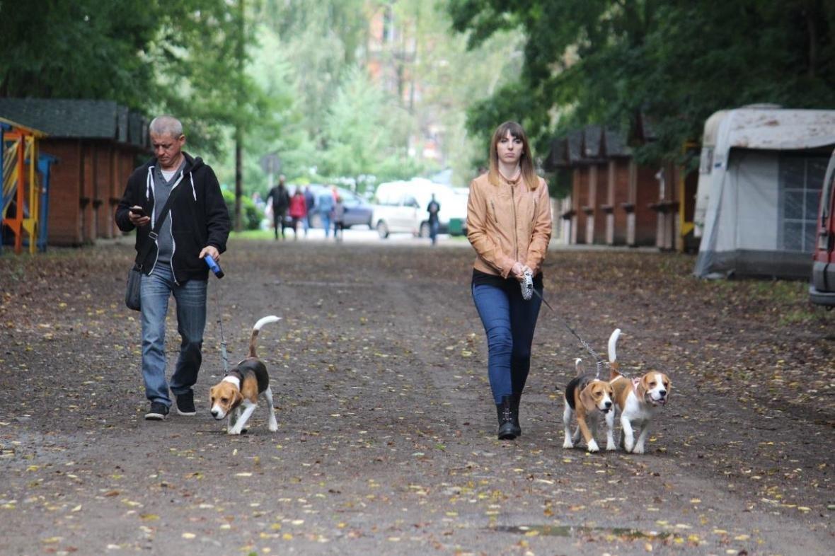 В Ужгороді у Боздоському парку пройшла масштабна виставка собак: фото, фото-8