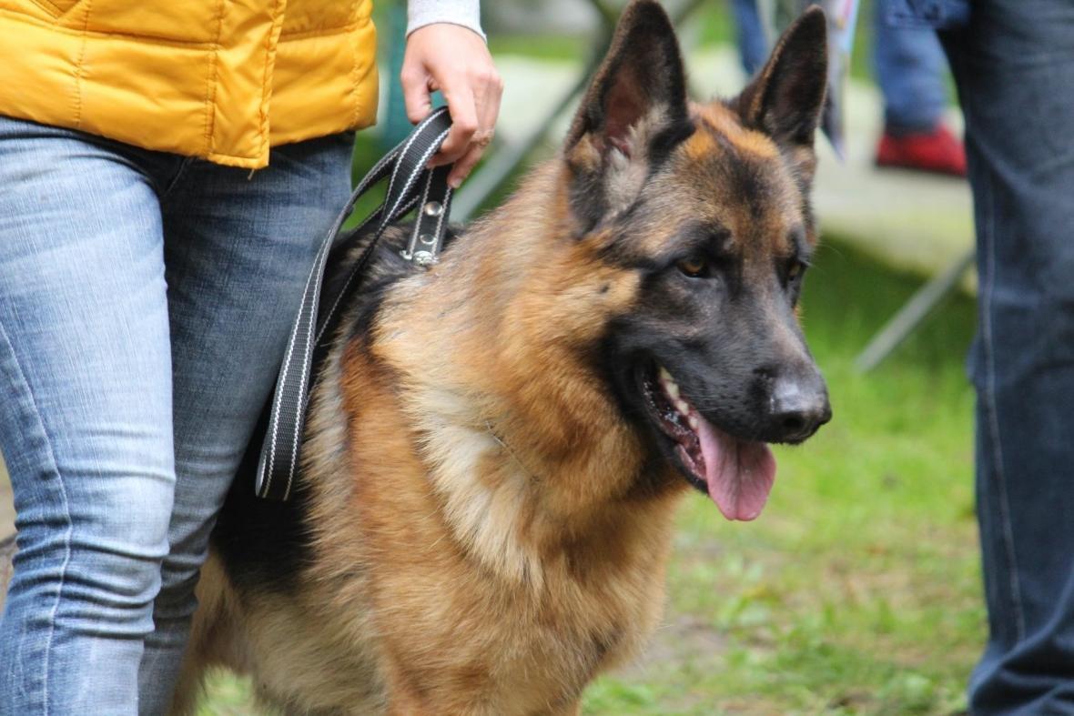 В Ужгороді у Боздоському парку пройшла масштабна виставка собак: фото, фото-9